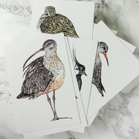 Boxed-Set of Six Waders and Shorebirds Illustrated Postcards