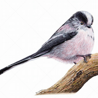Giclée Watercolour Wildlife Print, Garden Bird – Realistic - Long Tailed Tit.
