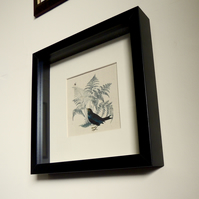 Blackbird and bee square framed print