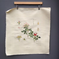 Wild dog rose - botanical print on canvas