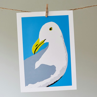 Douglas the Gull greetings card