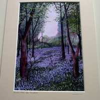 PRINT - Bluebell Wood