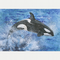 "A5 Greetings Card ""Leaping Orca"""
