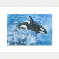 "Mounted Giclée Print ""Leaping Orca"" 9"" x 7"""