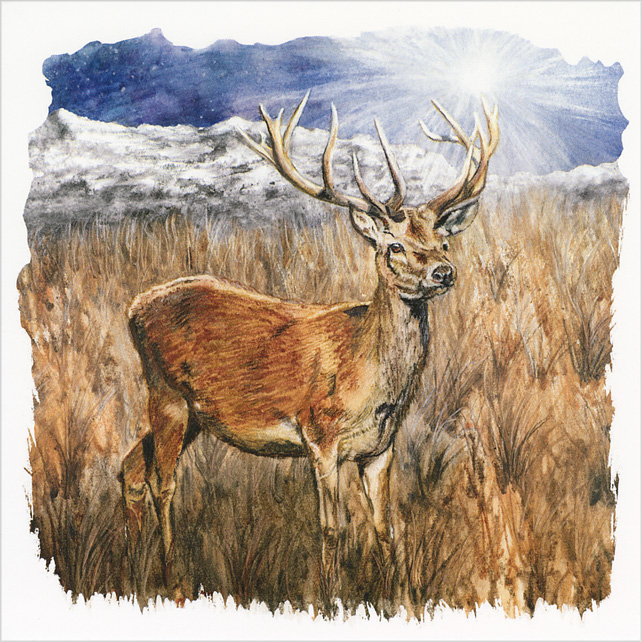 "Square Greetings Card ""The Stag and the Star"""