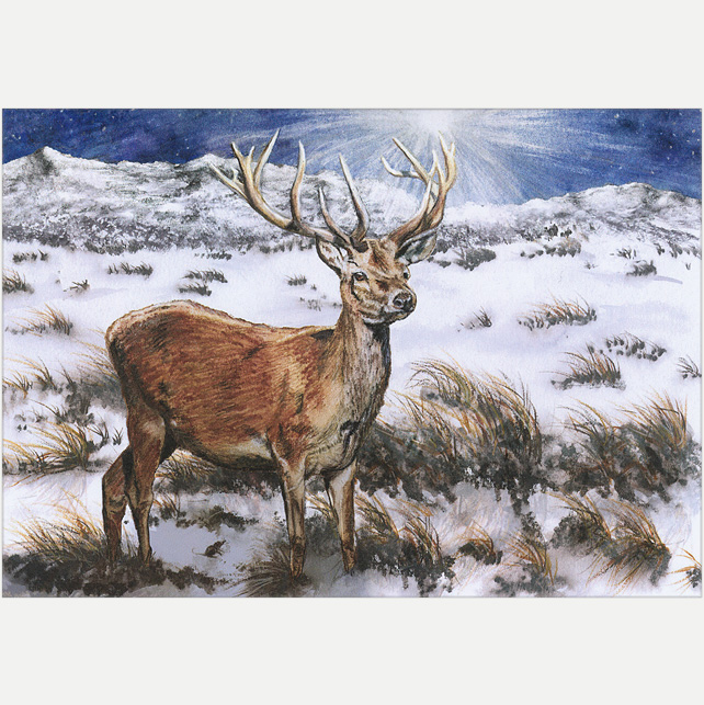 Wildlife Christmas Cards.Pack Of 10 Christmas Cards A5 By The Light Of The Midwinter Star