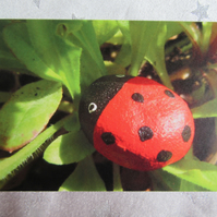 Ladybird on the Leaf - Greetings Card