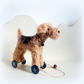 little terrier on blue Meccano wheels