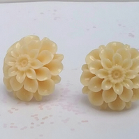 Chrysanthemum  Studs