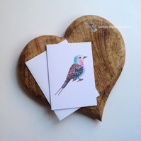 'Lilac Breasted Roller' card
