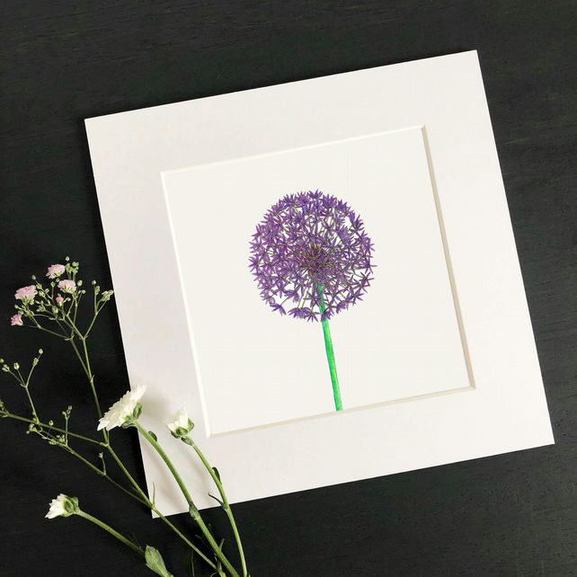 'Allium' Hand Finished Mounted Print