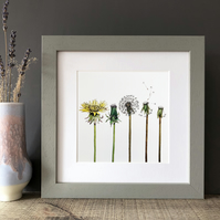 'The Dandelion' Framed Print