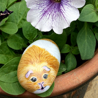 Guineapig hand painted pebble rock pet