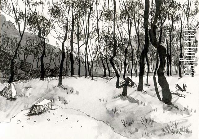 Longshaw birch trees  - original ink sketch