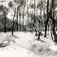 Longshaw birch trees  - original Peak District landscape art