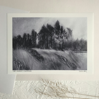 Lady Canning's Plantation, Ringinglow - Signed Art Print