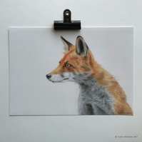 Red Fox - Giclee Print of an original drawing