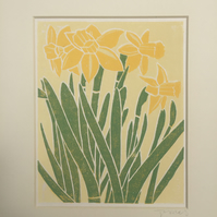 Daffodils (on white)