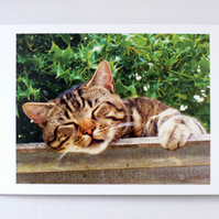 Greeting Card- Sleepy