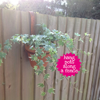 Fence Hanger Pot Ring