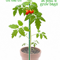 Urban Native™ Plant support for pots, containers & grow bags