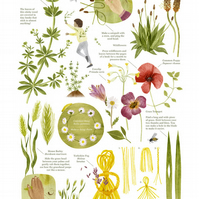 Grasses, Weeds and Wildflowers