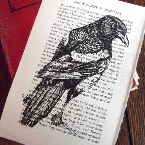 Stately Magpie Wonders of Bird Life Limited Edition Book Print