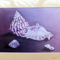 Purple and White Shells Print