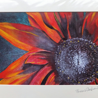 Red and Rusty Cherokee Rudbeckia Print