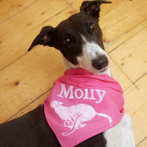 Custom pet name dog bandanna