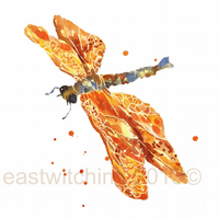 Watercolour DRAGONFLY Print
