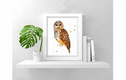 Bird Art Prints