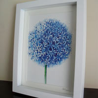 Blue Allium - Framed Print