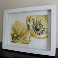 Large Yellow Anemones - Framed Print