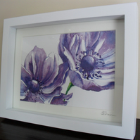 Large Purple Anemones - Framed Print