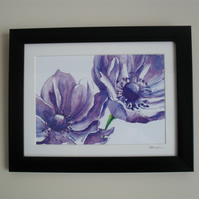 Purple Anemone - Framed Print (Black)
