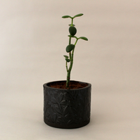 Black Botanical Plant Pot