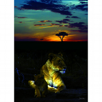 12 - SUNSET LIONS A3 POSTER