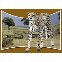 1 -  CHEETAH PANORAMA A3 POSTER