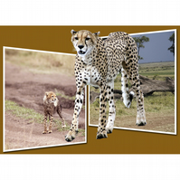 2 - CHEETAH PANORAMA A3 POSTER