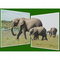 3 - ELEPHANT PANORAMA A3 POSTER