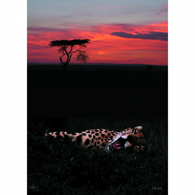 1 - SUNSET CHEETAH A3 POSTER