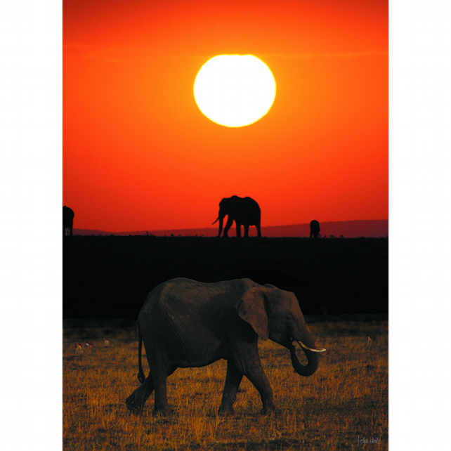 2 - ELEPHANT SUNRISE A3 POSTER
