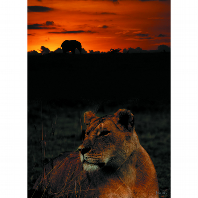 4 - LIONESS SUNSET A3 POSTER