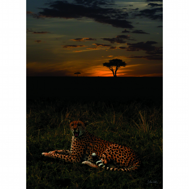 7 - SUNSET CHEETAH 1 A3 POSTER