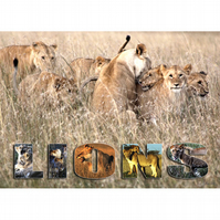 7 - 'LIONS AT PLAY' A3 POSTER