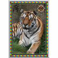 4 - TIGER - ONE OF THE 4 BIG CATS AS POSTER
