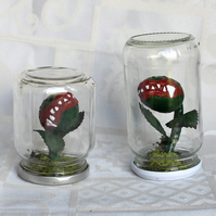 Killer Plant in Jar