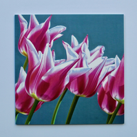 PINK TULIPS-SINGLE BLANK GREETINGS CARD