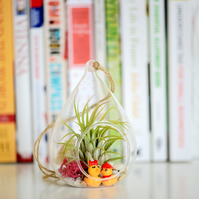 Air Plant Terrarium in Glass Water Drop Hanging Vase -- Home Wedding Decoration
